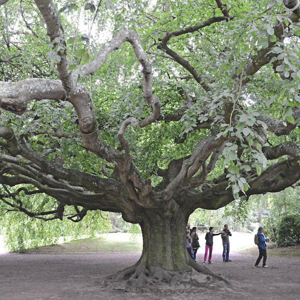 arbres 4