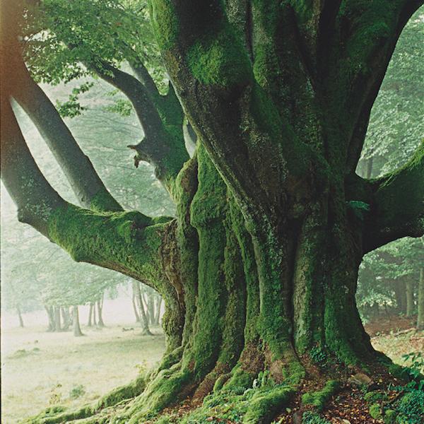 arbres 6