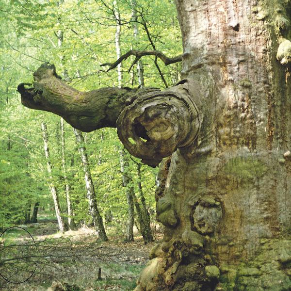 arbres 7