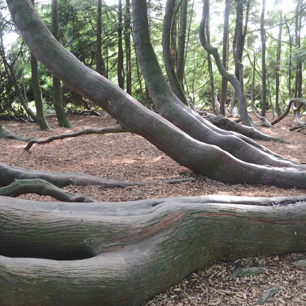 arbres 9