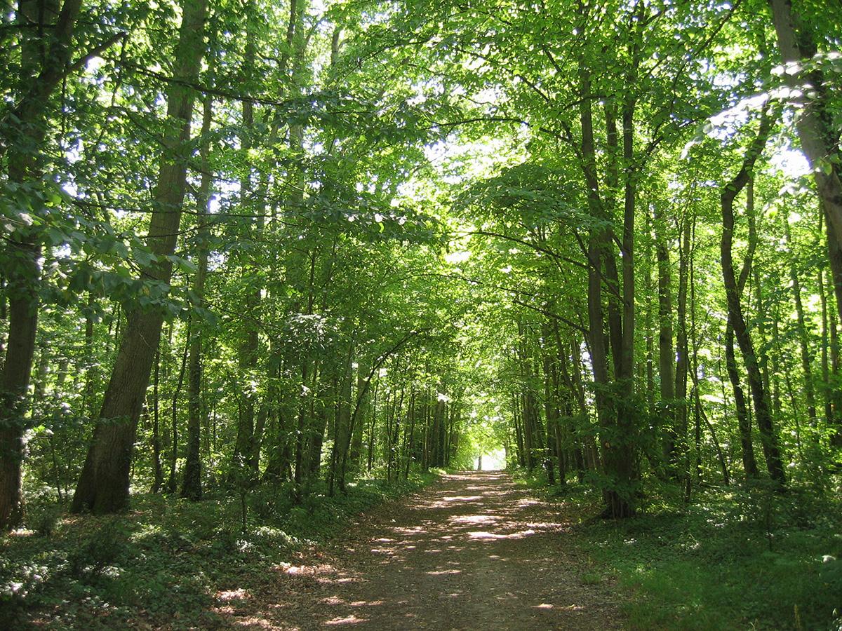 le festival de la forêt et du bois 2