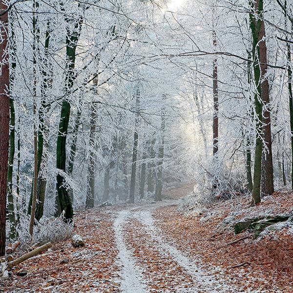 journée exploration forêt garde forestier
