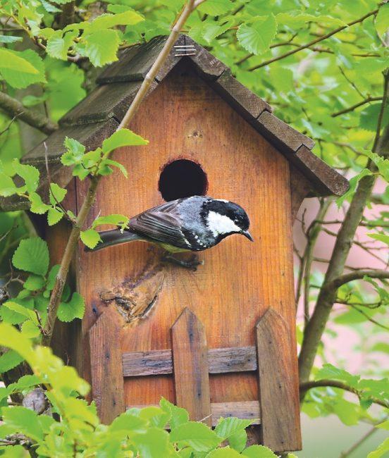 nichoir quel nichoir pour quel oiseau le blog d 39 ici. Black Bedroom Furniture Sets. Home Design Ideas
