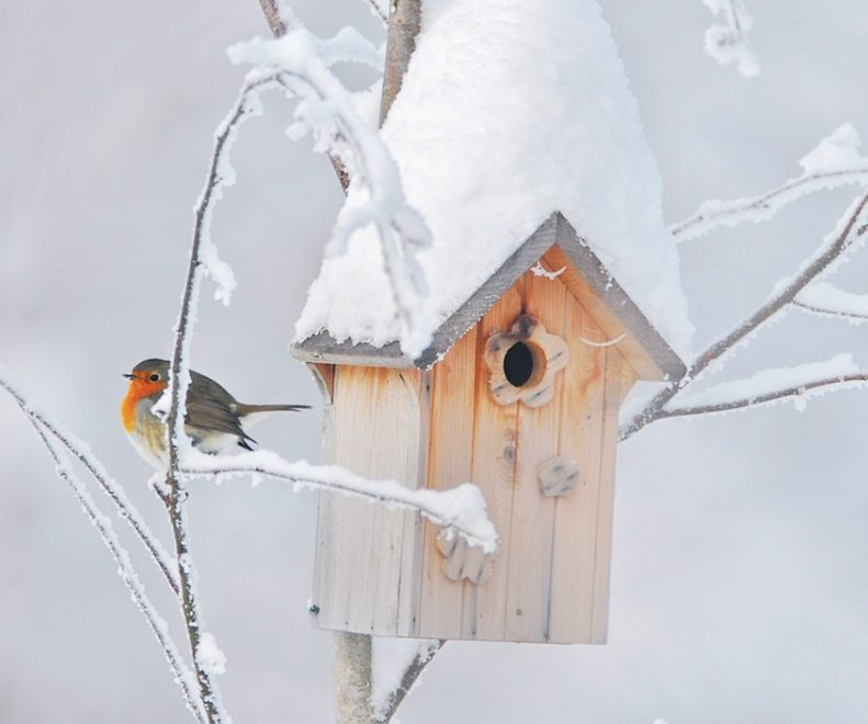 Nichoir : quel nichoir pour quel oiseau?