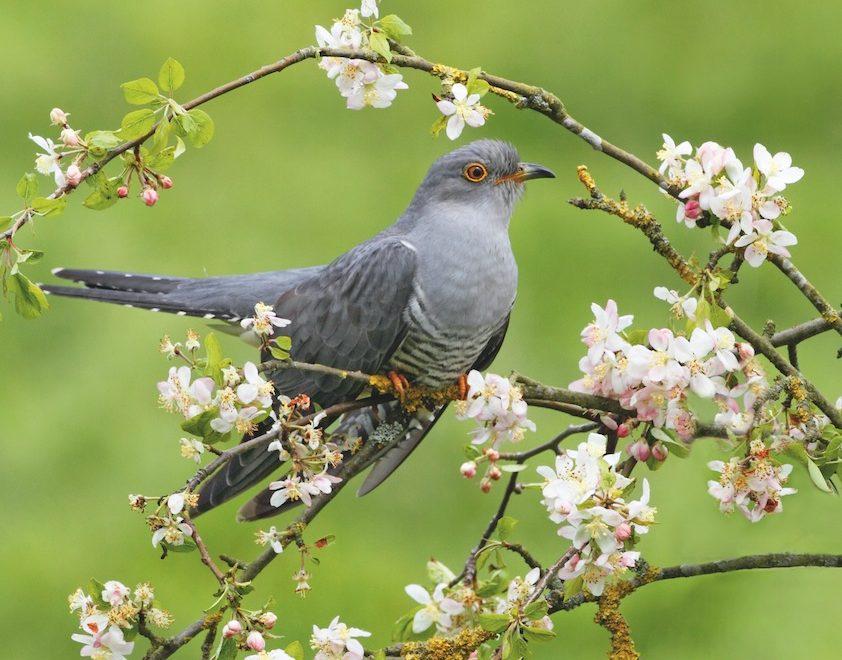 Oiseaux : qui chante le matin au jardin ?