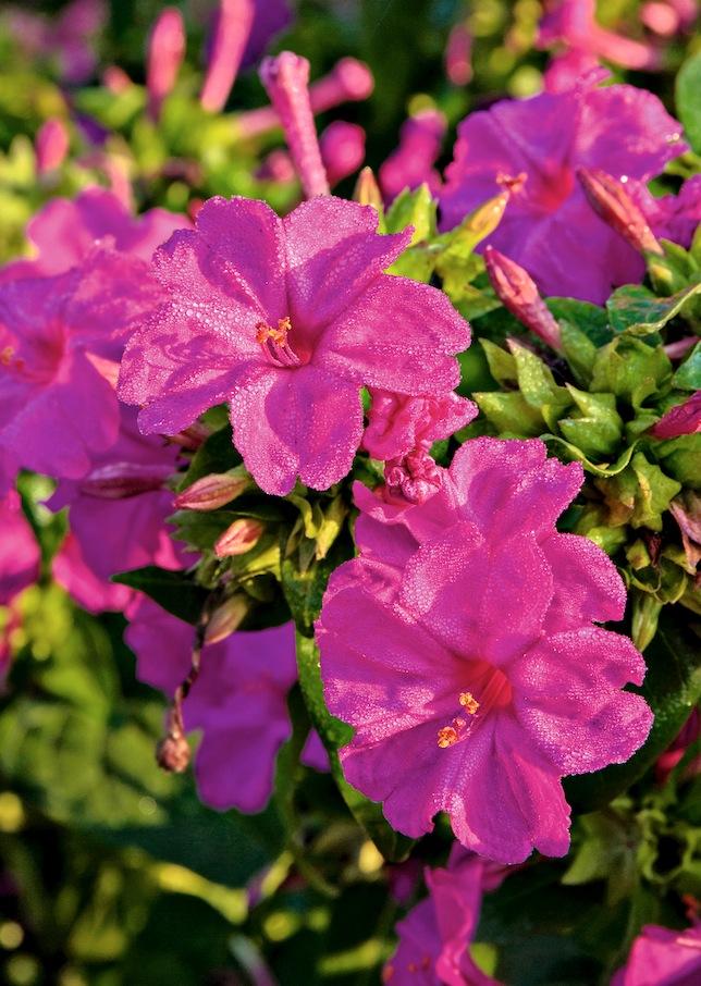 Fleurs parfumées 3