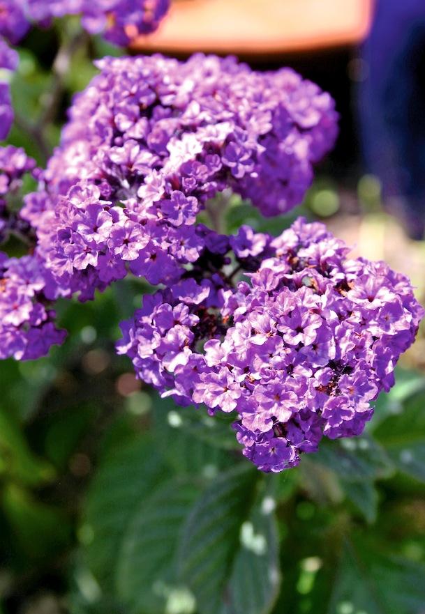 Fleurs parfumées 7