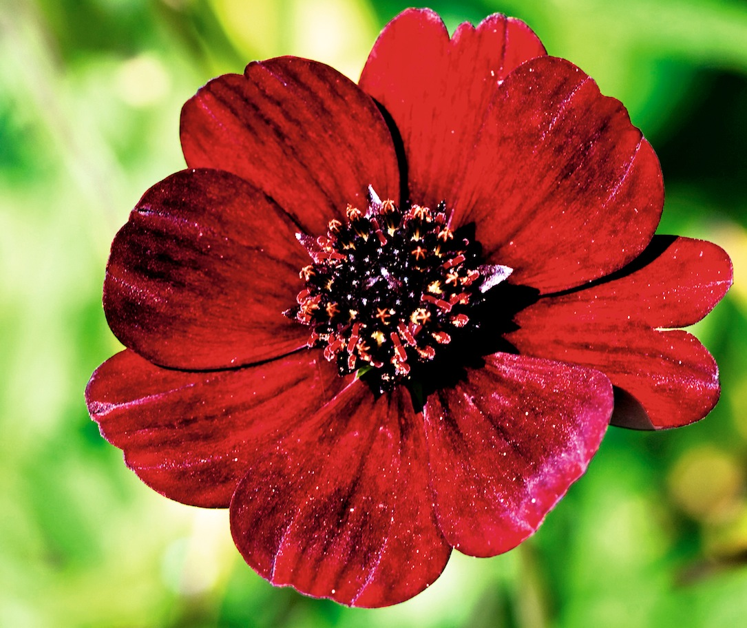 Fleurs parfumées 8