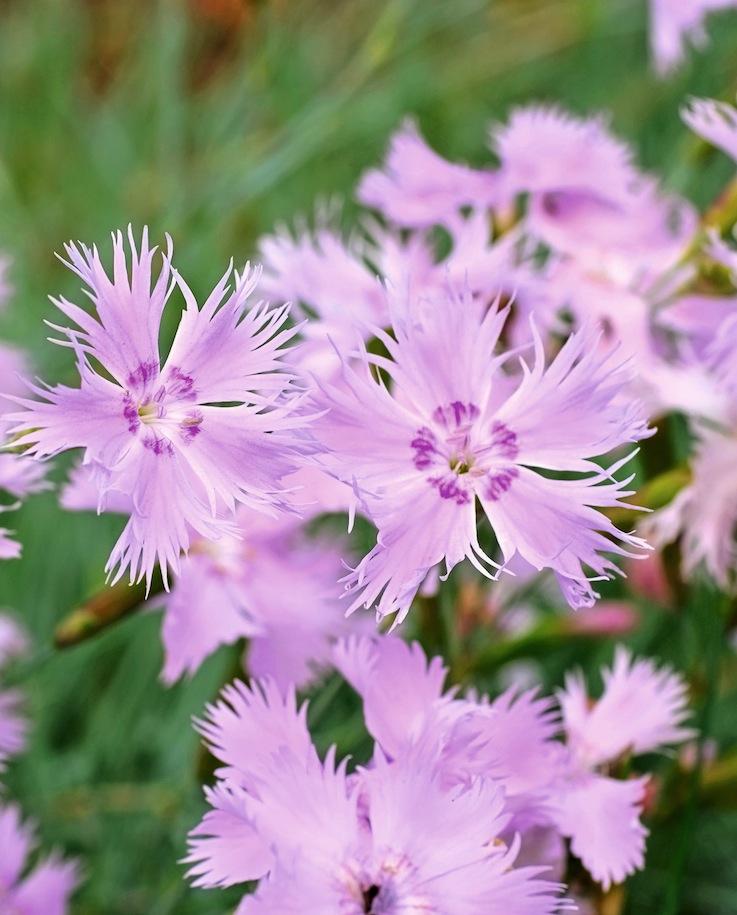 Fleurs parfumées