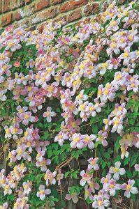 Plantes odorantes 4