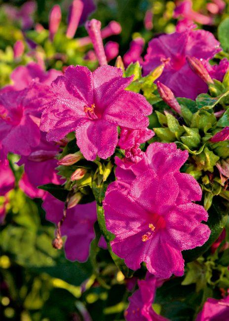 Fleurs parfumées : 10 fleurs pour embaumer votre été