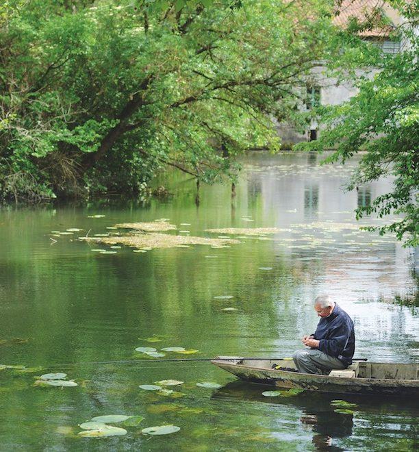 Marais poitevin au bord de l'eau