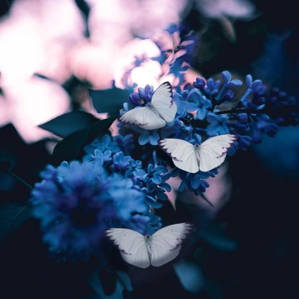 Papillons : apprenez à les reconnaître