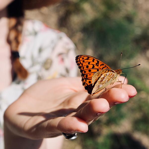 Comment reconnaître ces 10 espèces de papillons