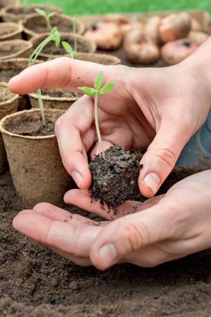 astuces jardinage pour réussir ses semis