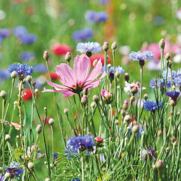 Jardinage : 10astuces pourunjardinbio