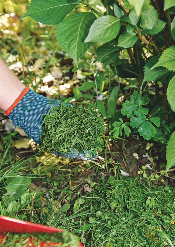 astuces de Jardinage
