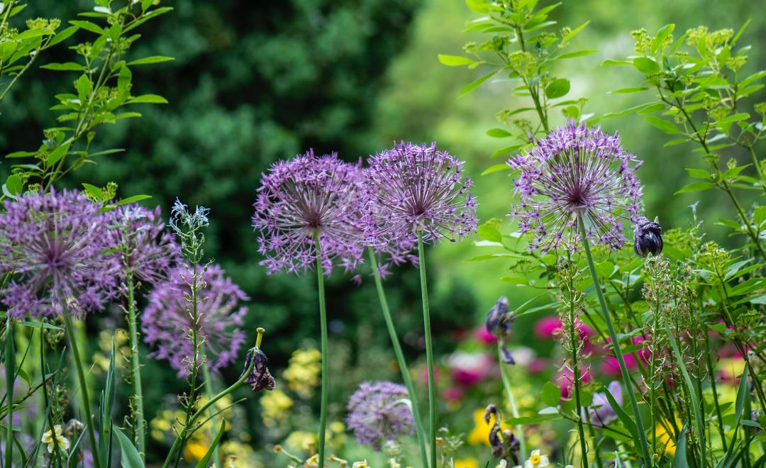 conseils pour entretenir son jardin sans produits chimiques