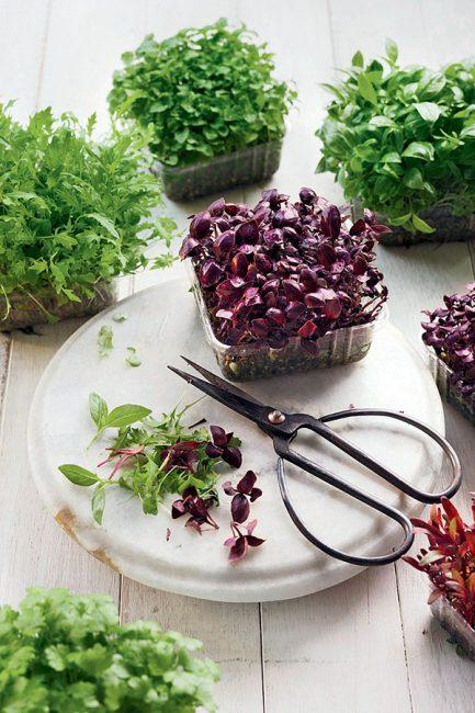 conseils pour faire pousser des graines germées