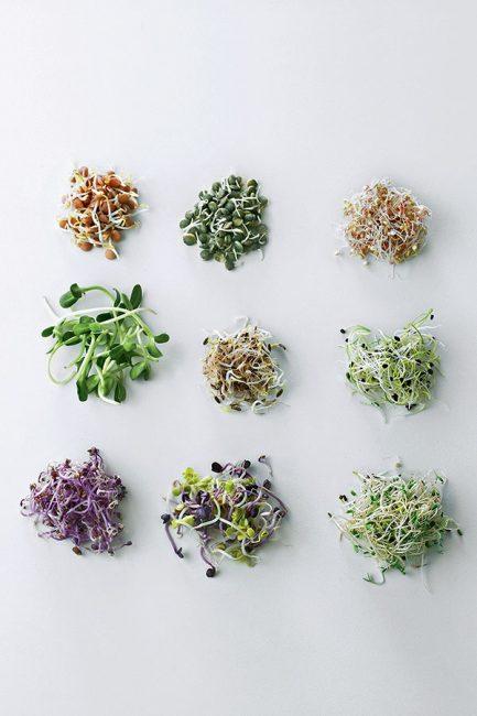 reconnaître les différentes graines germées