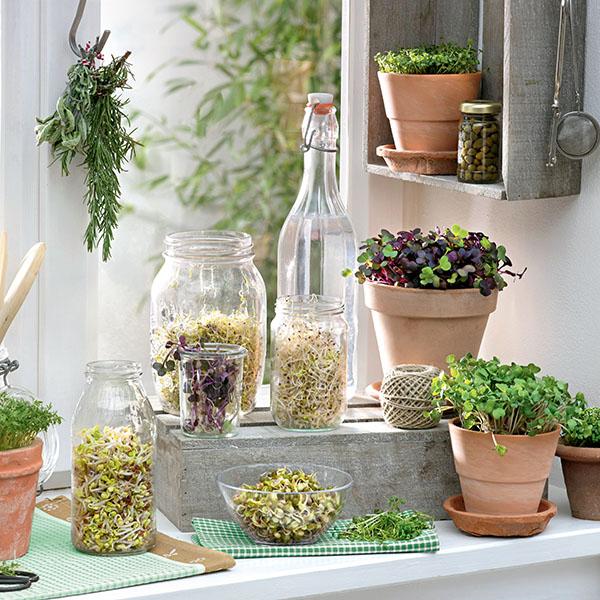 Potager urbain : tutoriel pour faire pousser des graines germées