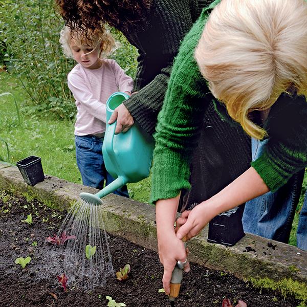 Potager facile : faire pousser du mesclun toute l'année