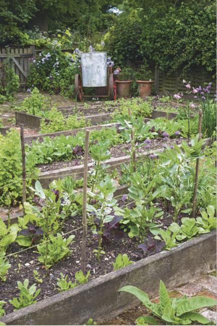 comment et pourquoi utiliser les engrais au jardin et au potager