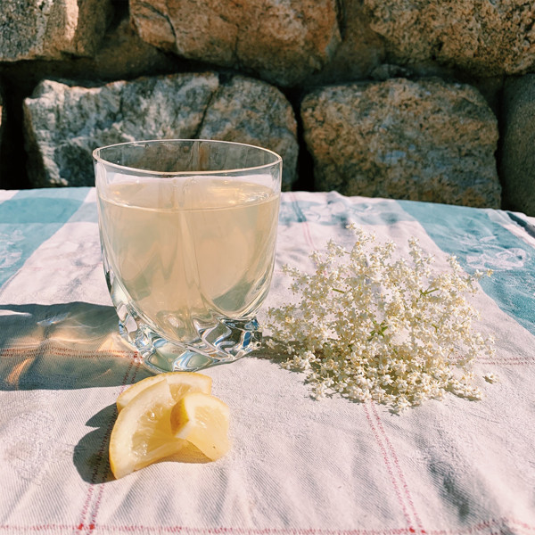 Recette facile de sirop de fleurs de sureau