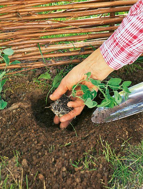 DIY : comment fabriquer une clôture champêtre facilement