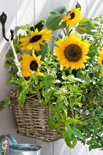 Potées fleuries : 10 idées de pots suspendus pour décorer le jardin