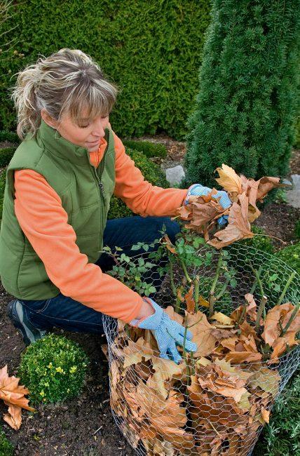 Feuilles mortes d'automne : que faire avec et quels sont leurs bénéfices ?
