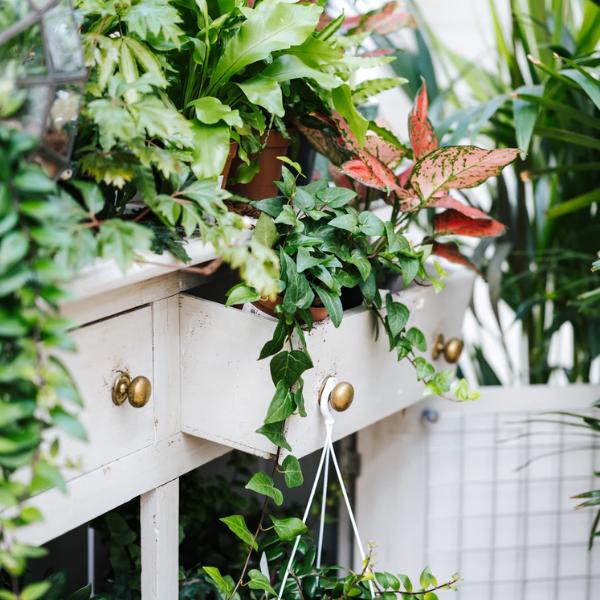Upcycling déco : 5 idées récup pour vos plantes
