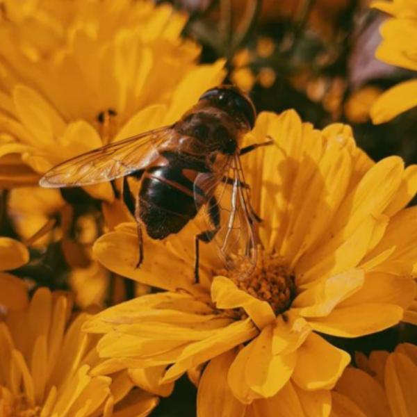 Les pollinisateurs naturels : alliés du jardin