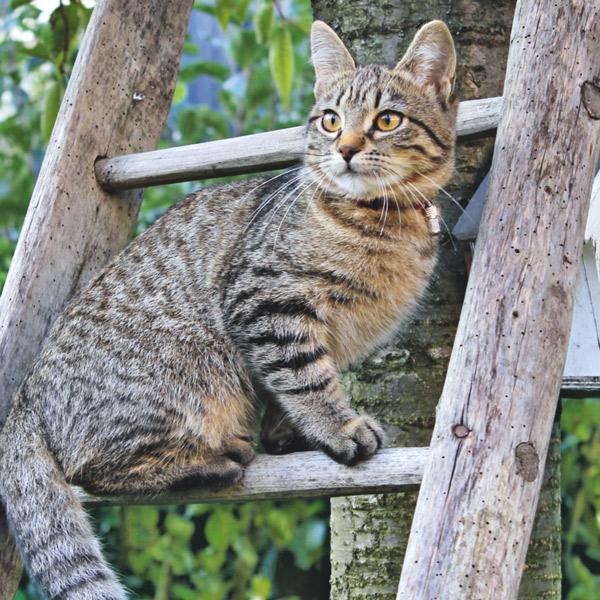 Comment habituer son chat à sortir au jardin ?